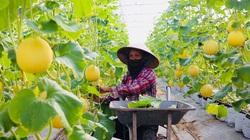 Hà Nội quản lý chất lượng, an toàn thực phẩm: Tăng hậu kiểm, giảm tiền kiểm