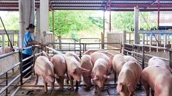 Đại biểu Quốc hội nói 3 kỳ họp vẫn phải ăn thịt heo đắt, thực tế giá heo hơi giờ ra sao?