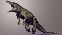 Khám phá bất ngờ về tổ tiên loài cá sấu ngày nay