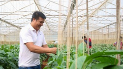 Dốc vốn trồng ớt chuông, anh nông dân thu tiền tỷ