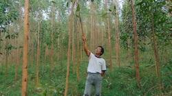 Không còn quỹ đất mở rộng diện tích rừng, chỉ còn cách nâng cao chất lượng
