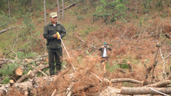 Lâm Đồng: Phá rừng giảm nhưng chưa được như kỳ vọng
