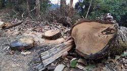 Mở 2,4km đường trái phép vào phá rừng tự nhiên ở Bắc Kạn: Giao Công an điều tra vụ việc