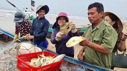 Hà Tĩnh: Tổ dân phố này ra biển đánh bắt, bất ngờ trúng loài cá này ví như lộc biển, thương lái tranh nhau mua