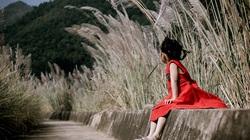 Phiêu bồng Bình Liêu mùa lau trắng