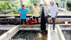 """Đồng Nai: Nuôi lươn không bùn cho ăn thêm ớt, thắng lớn ngay vụ đầu, ông nông dân """"chơi lớn"""" nuôi lên 22 hồ"""