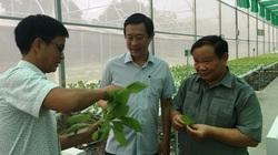 Vì sao trồng rau thủy canh công nghệ cao ở tỉnh Khánh Hòa có thể nhổ lên ăn ngay và luôn?