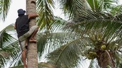 Indonesia cho phép sinh viên gặp khó khăn nộp dừa hoặc nông sản thay học phí