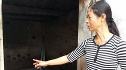 Nam Định: Có hay không dịch tả lợn châu Phi đang tái phát?