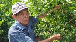 Đồng Tháp: Một ông nông dân kéo cả làng làm giàu nhờ trồng chanh cho quả trái vụ