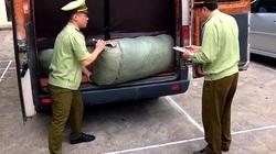 Lạng Sơn: Thu giữ gần 13.000 gói rau, quả giống nhập lậu