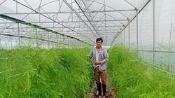 Liên kết chuỗi sản xuất măng tây thành công ở đất quan họ
