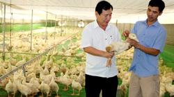 Bình Dương: Nhà nông mạnh dạn thay đổi để làm giàu