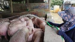 Giá thịt lợn bất ngờ tăng mạnh