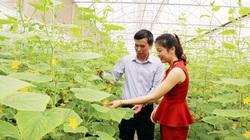 Hệ thống HTX cung ứng 18-30% lương thực, thực phẩm cho cả nước
