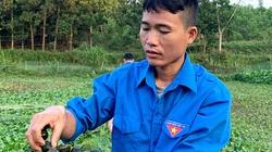 """Nuôi """"con siêu đẻ"""" bán làm hàng đặc sản, một nông dân tỉnh Tuyên Quang """"mò bắt"""" được nửa tỷ đồng mỗi năm"""