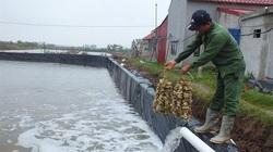 Giữa đại dịch Covid-19, ngành thủy sản Việt Nam vẫn tăng trưởng cao 5,2%/năm
