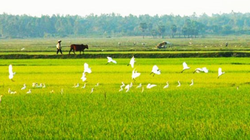 Bồi thường đất nông nghiệp cho cán bộ, công chức