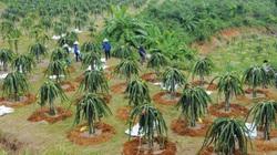 Nghịch lý dòng chảy FDI vào nông nghiệp