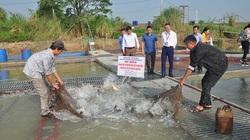 Bắc Ninh: Nuôi nhốt loài cá trắm đen to bự trong lồng, kéo mẻ lưới lên nhiều người trầm trồ