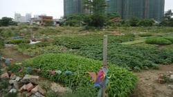 Năm 2021, mua đất nông nghiệp có được chuyển sang đất ở?