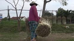 Làm phao câu cá từ thân cây ngô tăng thu nhập cho người dân