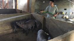 Thu nhập trên 200 triệu đồng/năm nhờ biết cách làm giàu từ đàn lợn