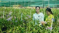 Thôn nữ Long An xinh như hotgirl trồng phong lan 200.000 chậu với 100 loài hoa, mỗi năm lời 2 tỷ đồng