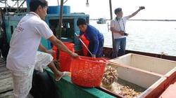 Kiên Giang: Ra đảo Hòn Tre xem dân bắt loài nhìn như con tôm mà cũng giống con bọ ngựa, bán thành đặc sản
