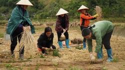 Thạch đen xứ Lạng rộng đường xuất khẩu sang Trung Quốc, giá bật tăng mạnh