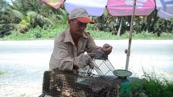 Bến Tre: Đến lạ, đi săn loài chuột tinh ranh dân không ra ngoài đồng mà móc lên cây dừa