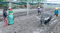 Dân miền Trung hối hả trồng rau màu, nuôi gà đón vụ Tết
