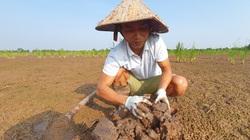 """Ra đầm hoang hết cuốc lại đào để nuôi con đặc sản giàu đạm, người nhà tưởng ông nông dân Hải Phòng bị """"ma nhập"""""""
