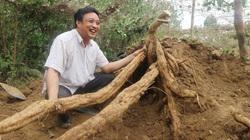 Sau lũ lụt miền Trung, Cục Trồng trọt khuyên đắp ụ đất trồng cây gì mà ra củ dài ngoằng, to bự?