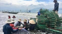 Nuôi tôm công nghệ cao, một ông dân tỉnh Khánh Hòa trúng lớn, chỉ bắt 1 lứa tôm bán đã lời 8 tỷ đồng