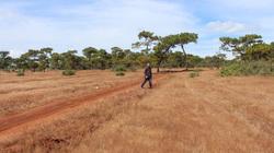 Tổng Cục trưởng Tổng cục Lâm nghiệp nói gì việc Gia Lai muốn lấy 174 ha đất rừng làm dự án thể thao?
