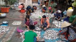 Đồng Tháp: Nước trong đồng rút ra sông, dân hứng miệng cống bắt hàng trăm ký cá linh, làm thịt mỏi cả tay