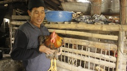 Lai Châu: Nuôi gà thịt sinh học, cải thiện dinh dưỡng, hỗ trợ giảm nghèo