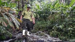 Lào Cai: 8 cây dược liệu quý hiếm tình trạng nguy cấp vừa phát hiện ở huyện Bát Xát là những loài nào?