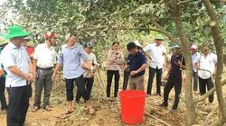 """Hỗ trợ nông dân miền Trung khôi phục sản xuất sau mưa lũ: Khuyến nông làm """"đầu tàu"""", đi đúng hướng"""