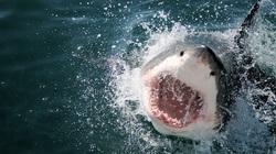 Bị tàu ngầm Nhật Bản tấn công, 900 lính thủy Mỹ trở thành... mồi cho cá mập