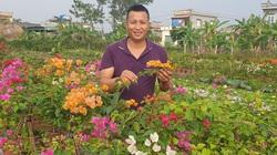Thái Bình: Chàng trai biến ruộng hoang thành trang trại hoa tiền tỷ