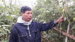 HTX trồng đủ các loại rau dưa an toàn thu gần tỷ đồng mỗi năm