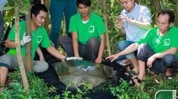 Ảnh: Cận cảnh cá thể rùa Hồ Gươm quý hiếm nhất thế giới nặng gần 90kg mới được phát hiện ở Đồng Mô