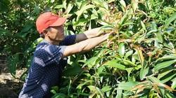 Tây Ninh: Lấy rau rừng, rau dại ven sông bờ suối về trồng lung tung trong vườn nhà, nông dân thu tiền đều tay