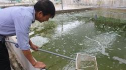 Nam Định: Nuôi tôm sạch trong bể xi măng, nuôi cá đặc sản đầy ao, một ông nông dân tích cóp được tiền tỷ