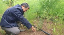 """Nam Định: Một ông nông dân ra giữa đảo trồng bạt ngàn thứ """"rau vua"""", cây tốt bời bời mà bỏ túi hàng chục triệu/tháng"""