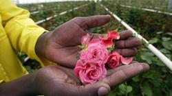 """Chuyến hành trình tham quan """"Thiên đường hoa hồng"""" tại Kenya"""