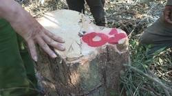 Đắk Lắk: Khởi tố một giám đốc công ty lâm nghiệp để mất rừng