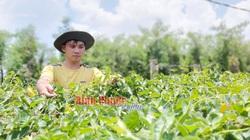 Bình Phước: Trồng thứ cây ra hoa vừa thơm vừa đẹp, ăn bổ dưỡng, bán đắt tiền, khen cứ khen nhưng vẫn phải cảnh báo